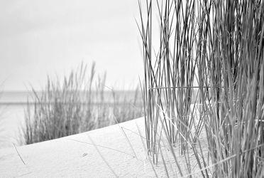 Bild mit Gräser, Strand, Meerblick, Ostsee, Meer, Düne, Dünen, Dünengras, Nordsee, maritimes, schwarz weiß, SW