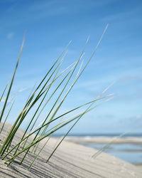 Bild mit Natur, Wasser, Landschaften, Seen, Strände, Sonnenuntergang, Sonnenaufgang, Strand, Sandstrand, Ostsee, Meer, Düne, Dünen, Dünengras, See, maritimes, Strandhafer