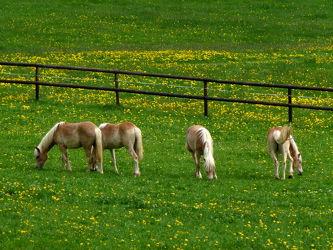 Bild mit Tiere, Pferde, Pferde, Tier, Kinderbild, Kinderbilder, Pferd, reiten, Pferdeliebe, pferdebilder, pferdebild