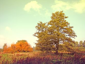 Bild mit Landschaften