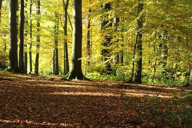 Bild mit Natur, Natur, Bäume, Wälder, Wald, Baum, Blätter, Umwelt