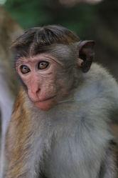 Bild mit Säugetiere, Affen