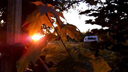 Bild mit Wälder, Sonnenuntergang, Sonnenaufgang, Wald, Blätter, Blatt, Görlitz, Görlitzer Bahnhof