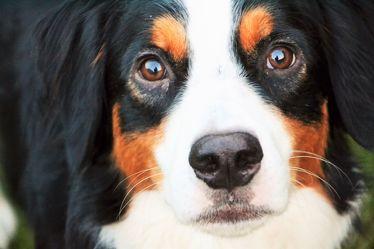 Bild mit Haustiere, Hunde, Tier, Hund, Dog, Familienhund, Tierisches