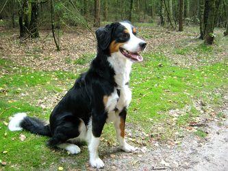 Bild mit Tiere, Haustiere, Hunde, Tier, Hund, Dog, Hundebild