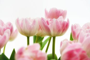 Bilder mit Blumen