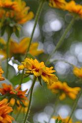 Gelbe Blumen mit Bokeh