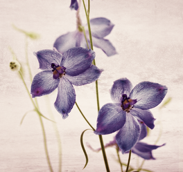 Lila Blumen 2