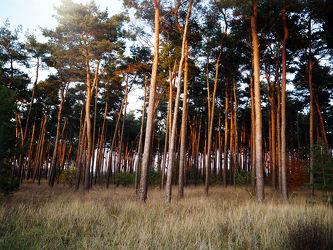 Bild mit Natur, Bäume, Wälder, Sonnenuntergang, Sonnenaufgang, Wald, Baum, Feld, Wäldchen, Felder