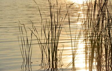 Bild mit Natur, Wasser, Gewässer, Sonnenuntergang, Sonnenaufgang, Schilf, Meer, See, Ruhe am See, Am See