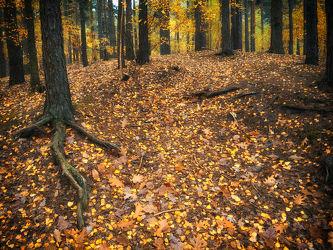 Bild mit Natur, Bäume, Wälder, Herbst, Wald, Baum, herbstlich