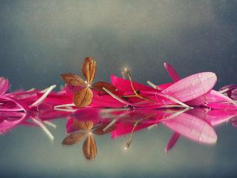 Bild mit Blumen, Blume, Gerbera, hortensien, Blüten, blüte, Hortensie, gerberablüten
