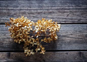 Bild mit Pflanzen,Blumen,Holz,Holzstruktur,Holzwand,Blume,Pflanze,Holzbretter,hortensien,Hortensie