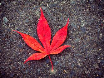 Bild mit Natur, Rot, Blätter, Blatt, Baumblatt