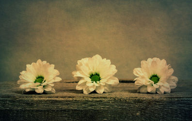 Bild mit Blumen, Gerberas, Blume, Gerbera, Retro, Blüten, VINTAGE, blüte