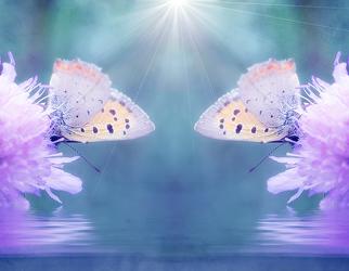 Bild mit Rosa, Lila, Insekten, Blau, Schmetterlinge, Kinderbild, Kinderbilder, Kinderzimmer, Makros, Schmetterling, butterfly, Falter, Insekt