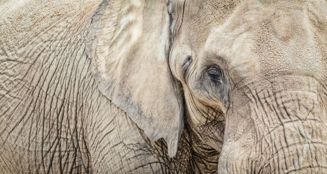Bild mit Tiere, Elefant, Elefanten, Africa, Afrika, Wildtiere, Tierwelt, Wildlife