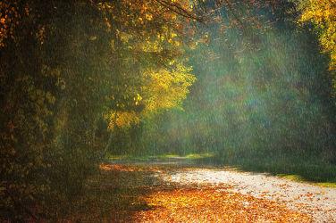 Bild mit Natur, Landschaften, Bäume, Wälder, Wege, Wald, Baum, Weg, Blätter, Blatt, Regen