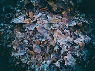 Bild mit Natur, Bäume, Winter, Schnee, Eis, Wälder, Wald, Baum, Blätter, Waldboden, Blatt, Winterzeit, Frost, gefroren
