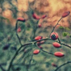 Bild mit Natur