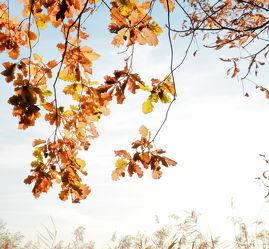 Bild mit Natur,Blätter