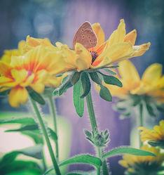 Bild mit Blumen, Insekten, Schmetterlinge, Blume, Blüten, Schmetterling, garten, Blumenblüten, Gartenzeit