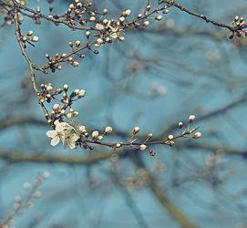 Bild mit Natur, Blumen, Baum, Blume, Blüten, blüte, Ast