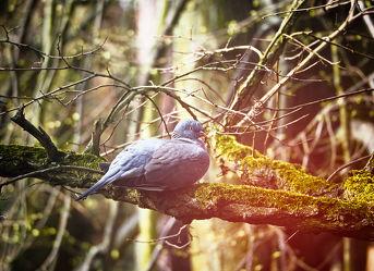 Bild mit Tiere, Vögel, Vögel, Baum, Tier, Ast, Tauben, taube