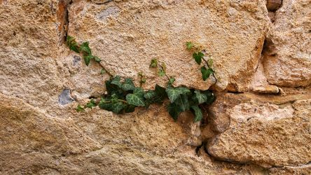Bild mit Natur,Mauer,garten,Wall,historic,sandstein,ivy,efeu