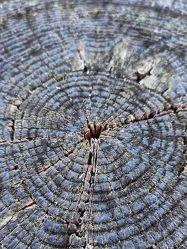Bild mit Bäume, Wald, Hintergrund, Makrofotografie, Tree, Abstrakt, Bunt, WOHNEN, FARBE, macro, Leinwand, Rund, grau, pattern, kreis