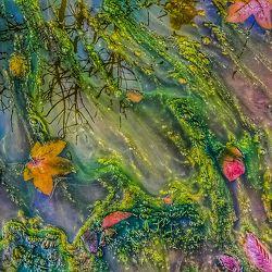 Bild mit Wasser, Grün, Lila, Abstrakt, Abstrakte Malerei, Herbstblätter, pfützen, Pfütze