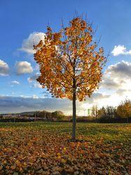Bild mit Orange, Gelb, Himmel, Bäume, Herbst, Wald, Baum, Bunt, Herbststimmung, Jahreszeit