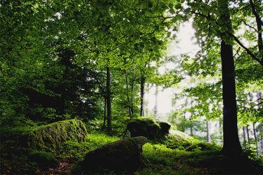 Bild mit Grün, Bäume, Wald, Märchenwald, Laubwald, Zauberwald, Moos, schwarzwald, granitblöcke, findlinge