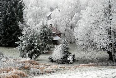 Bäume im Raureif mit Umgebindehaus