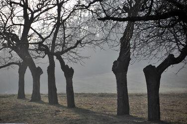 Dezemberbäume im Sonnenlicht