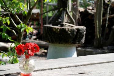 Rote Gerbera in Glasvase
