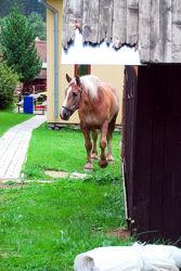 Freilaufendes Pferd