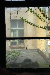 Görlitz - Mattes Fenster mit Efeuranke