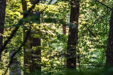 Bild mit Natur, Grün, Bäume, Jahreszeiten, Sommer, Wald, Licht, Entspannung, Perspektive, Unterholz, Schatten, Durchblick
