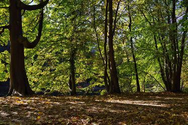 Bild mit Natur, Himmel, Bäume, Jahreszeiten, Herbst, Blau, Wald, Blätter, Perspektive, Äste, frankfurt, Laub, Zweige, aufwärts, Stadtwald