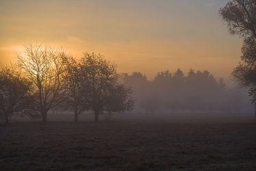 Bild mit Pflanzen, Bäume, Herbst, Sonnenaufgang, Wege, Nebel, Blätter, Landschaft, Wiese, Spaziergang, Entspannung, mystisch, Einsam, geheimnisvoll