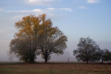 Bild mit Pflanzen, Bäume, Herbst, Sonnenaufgang, Wege, Nebel, Blätter, Landschaft, Wiese, Spaziergang, Entspannung, November, mystisch, Einsam, geheimnisvoll