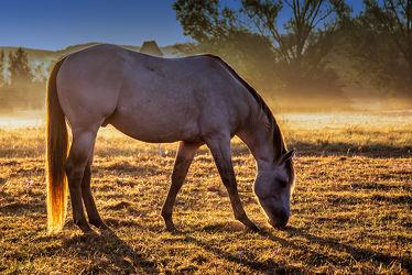 Bild mit Natur, Sonnenaufgang, Nebel, Pferd, Weide, landwirtschaft, Dunst, Nutztier, grasen, Warmblut, Pferdehaltung