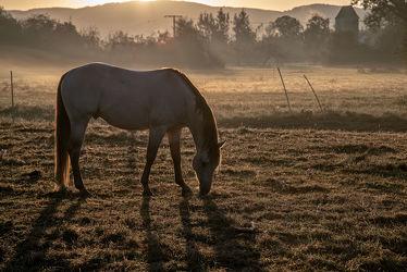 Bild mit Natur, Bäume, Sträucher, Sonnenaufgang, Nebel, Pferde, Tier, Licht, Kinderbild, Kinderbilder, Pferd, Weiden, Schatten, Dunst, grasen, Pferdeliebe, pferdebilder, pferdebild