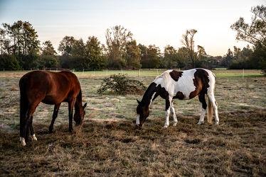 Bild mit Tiere, Natur, Sonnenaufgang, Pferde, Pferde, Landschaft, Gegenlicht, Licht, Kinderbild, Kinderbilder, Stille, duo, Wiesen, Weide, Paar, reiten, Schatten, Einsamkeit, Koppel, Morgens, Pferdeliebe, pferdebilder, pferdebild