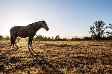 Bild mit Tiere, Natur, Bäume, Sonnenaufgang, Pferde, Landschaft, Wiese, Gegenlicht, Licht, Stille, Wiesen, Weide, reiten, Schatten, Einsamkeit, Koppel, Morgens