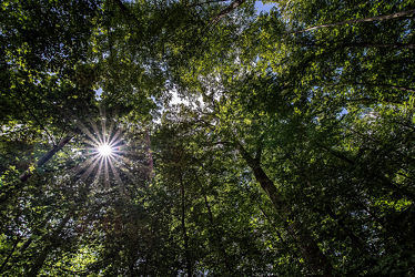 Bild mit Grün, Bäume, Deutschland, Wald, Waldlichtung, Blätter, Naturschutzgebiete, Naturpark Südeifel