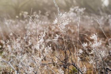Bild mit Natur, Pflanzen, Gräser, Landschaften, Jahreszeiten, Winter, Eis, Deutschland, Nebel, Kälte, Frost, Reif, Dunst, Kälteeinbruch, Bayern, Januar