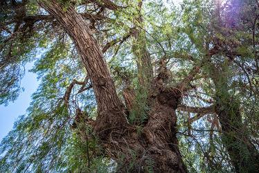 Bild mit Natur, Bäume, Baum, Blätter, Licht, Planze, Park, Äste, Schatten, Zweige, Chile, Südamerika, Pfefferbaum, Pfefferbaum