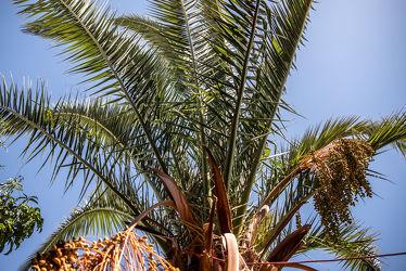 Bild mit Pflanzen, Himmel, Jahreszeiten, Palmen, Blau, Sommer, Licht, Landschaft und Natur, garten, Wolkenlos, exotisch, Chile, Südamerika